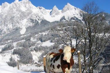 Blick vom Rettenbachgut auf das Tennengebirge