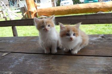 Katzenbabys warten auf euch