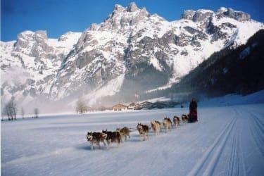 jährliches Hundeschlittenrennen im Jänner