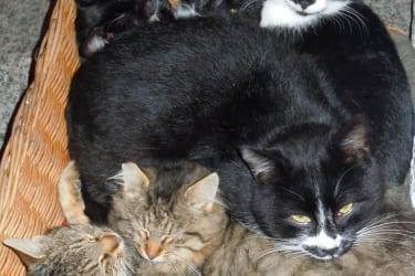 Unsere neuen Katzen auf dem Bauernhof Wildau