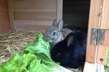Unsere zwei süßen Zwerghasen - Blacky und Lausa - lieben es, geschreichelt und herumgetragen zu werden!