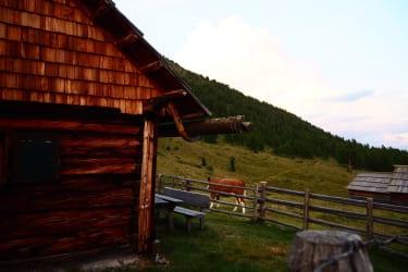 Besuch vor der Hütte