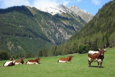 Blick ins Liegnitztal mit unseren Kühen