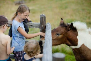 Kontakt mit Tieren