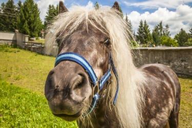 Pony Sabrina