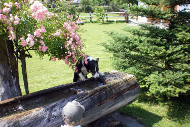 Spielplatz Brunnen