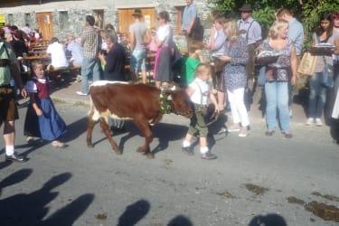 Lena mit Kalb beim Bauermarkt