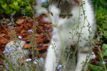 Katzenbaby Samy