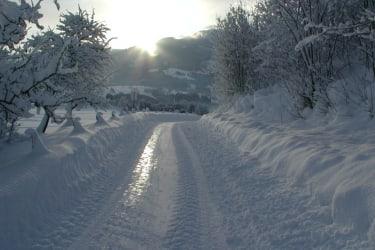 Ein Wintermorgen - wohin geht die Reise ?