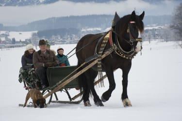 horse sledge