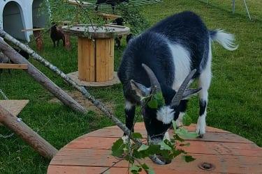 Ziegen- und Schafgehege