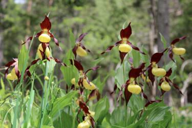 Die Region ist reich an Orchideen