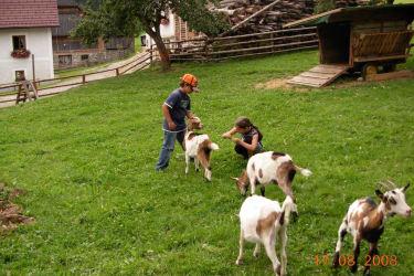 unsere Ziegen sind zum Anfassen