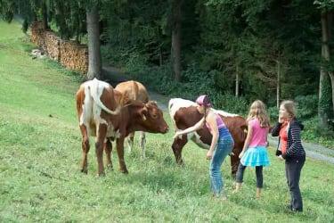 Kinder mit Rinder