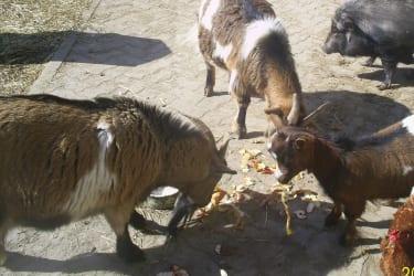 Friedliche Tierwelt