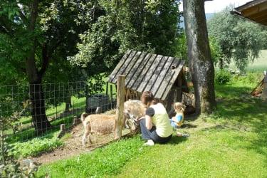 Schaf und Ziege