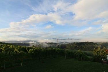 Weingartenstimmung