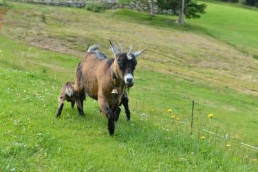 Frieda mit ihren Babys