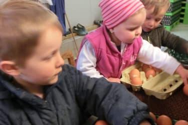 beim Eierschlichten im Hühnerstall