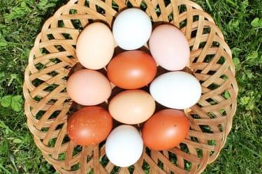 Eier von der Natur gefärbt