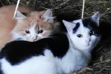 Katzen Minka und Susi