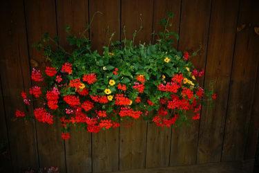 Viele Blumen schmücken den Hof