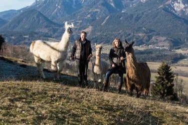 Lama- /Alpaka-Wanderung