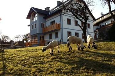 Hausfoto Sommer mit Schafen