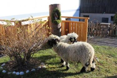 Unsere Schafe
