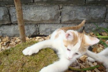 kleines Kätzchen am Menthof