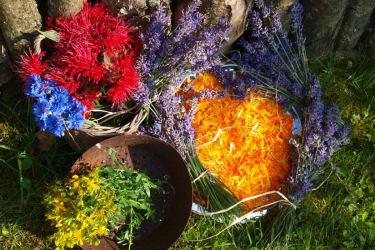 Ein Komposition von Kräutern und Blüten von unserer Kräuterpädagogin Trude