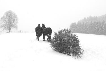 Django bringt den Weihnachtsbaum