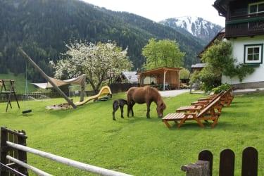 die Ponys auf der Hofwiese