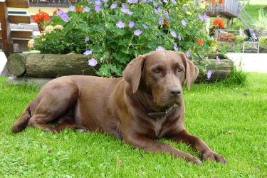 Hofhund Jamie