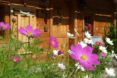 Blumenpracht