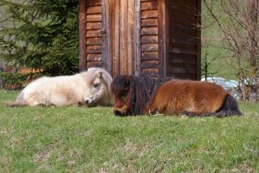 Stubsi & Cindy