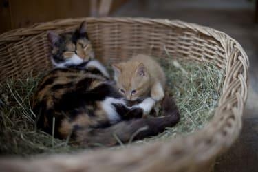 Kitty und Garfild