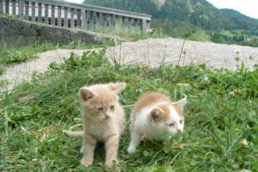 neugierige Katzenbabys