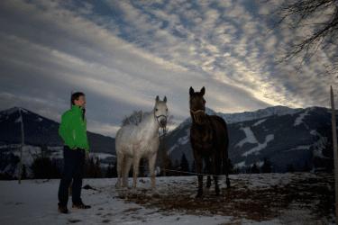Pferde am  Brandstaetterhof Pichl-Reiteralm
