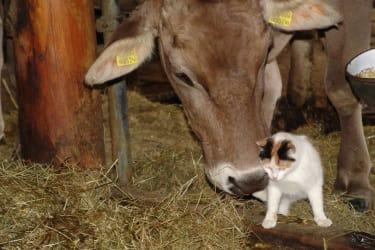 Tiere groß und klein