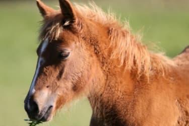 Pony Whykiki