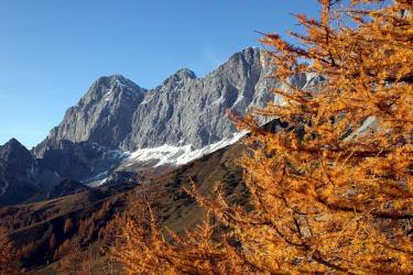 Goldener Herbst unterm Dachstein