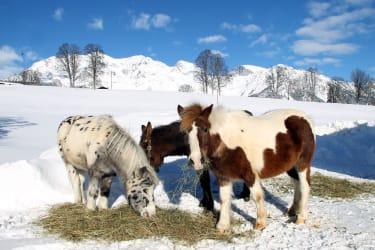 Ponies Bella und Snoopy mit Eseldame Sissi