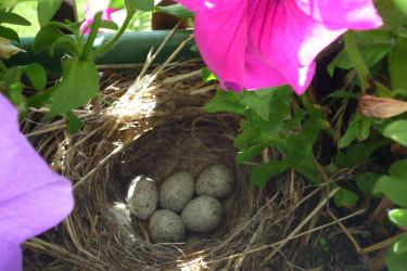 Vogelnest am Balkon