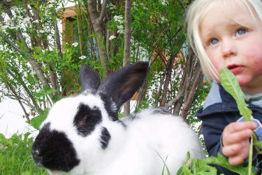 Unser Hase