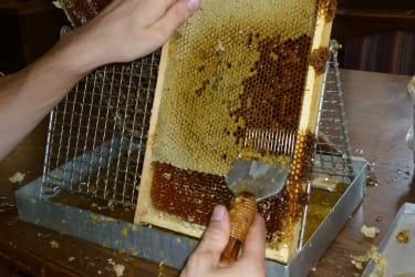 Honig wird gewonnen