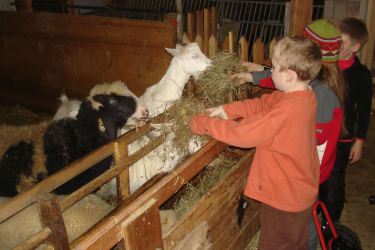 Kinder beim Schafe und Ziegen füttern