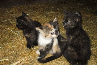 Katzenbabies2