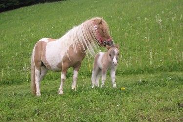 Viele Tiere gibt es am Breilerhof, Schladming