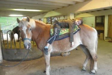 Larissa das Kuschelpferd
